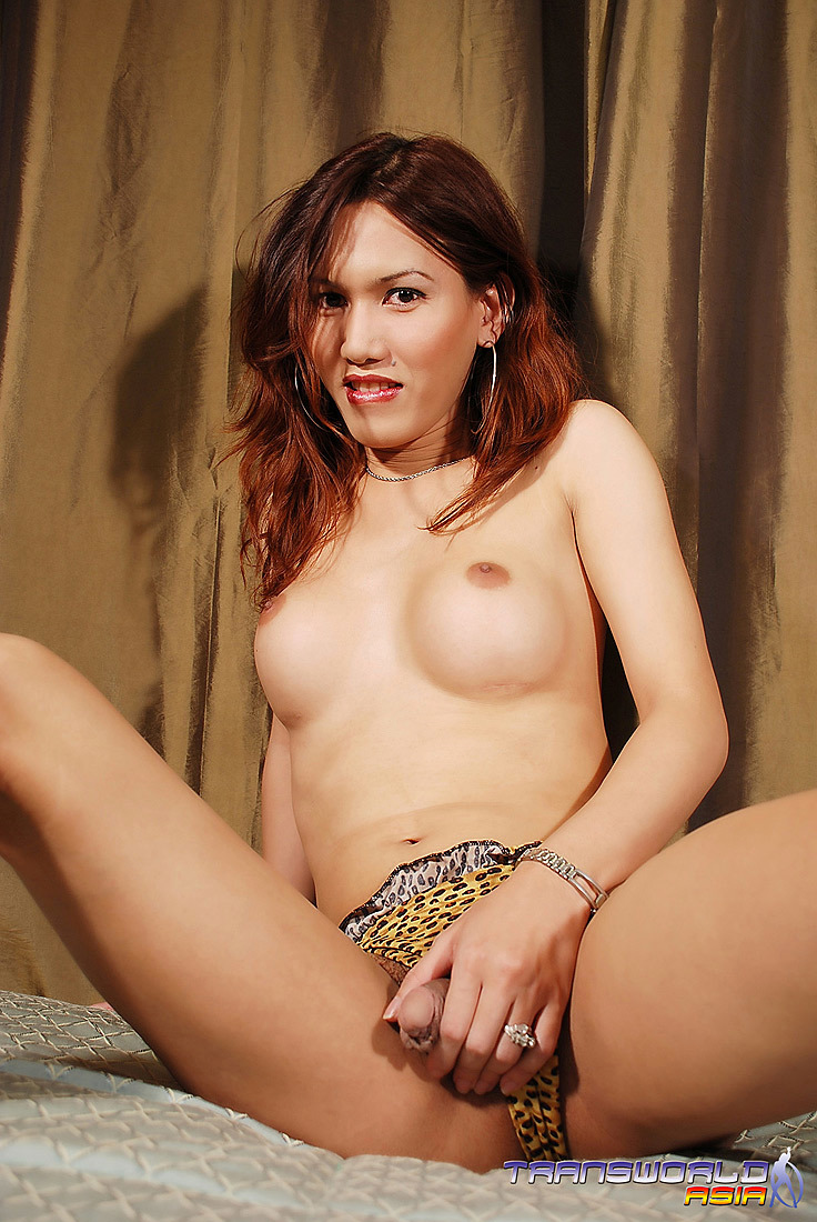 A Gorgeous Thai Femboy With Enormous Boobs And A Bountiful Tool Cumming Rough